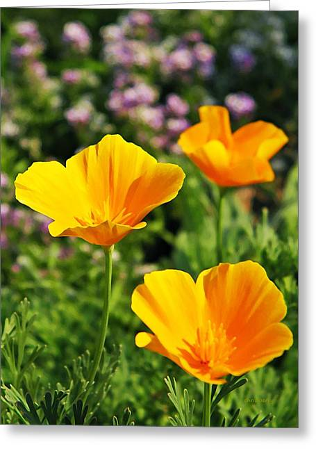 California Poppies In October Greeting Card by Chris Berry