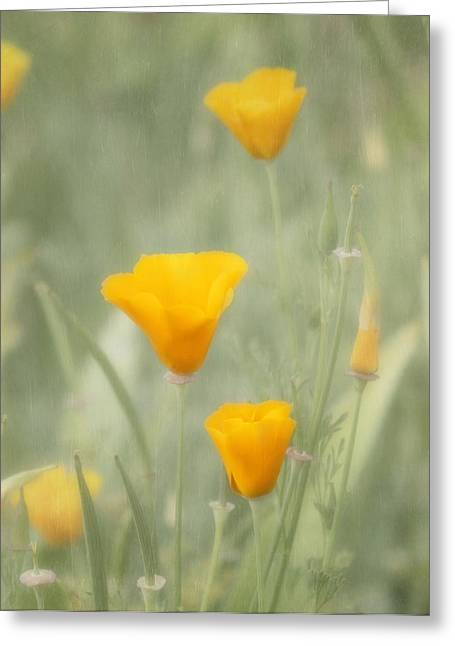 California Poppies Greeting Card by Kim Hojnacki