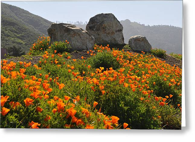 Greeting Card featuring the photograph California Poppies by Lynn Bauer