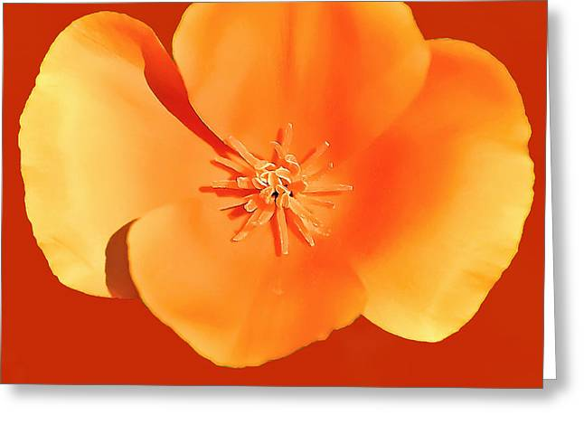 California Poppy Painting Greeting Card