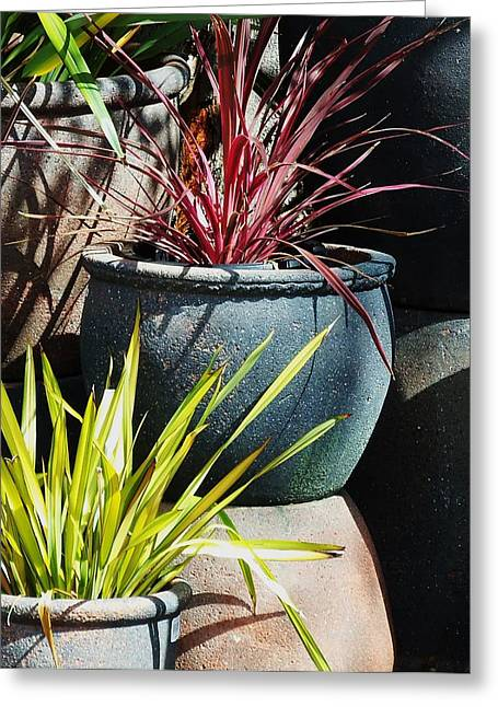 California Potted Plants Greeting Card