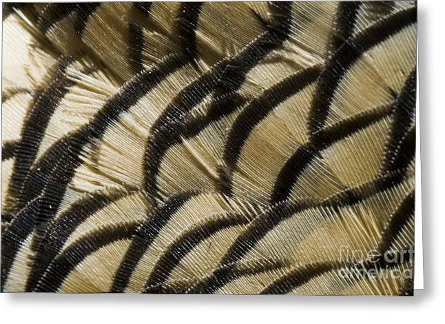 California Quail Breast Feathers Greeting Card by William H. Mullins