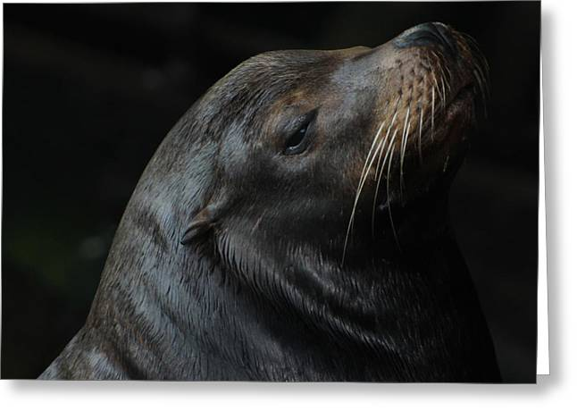 California Sea Lion Greeting Card by Deana Glenz