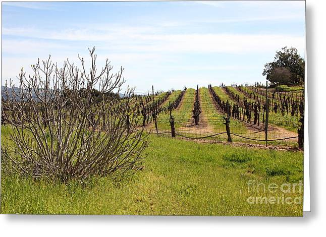 California Vineyards In Late Winter Just Before The Bloom 5d22121 Greeting Card
