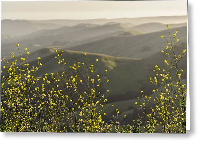 Greeting Card featuring the photograph California Wildflowers by Steven Sparks