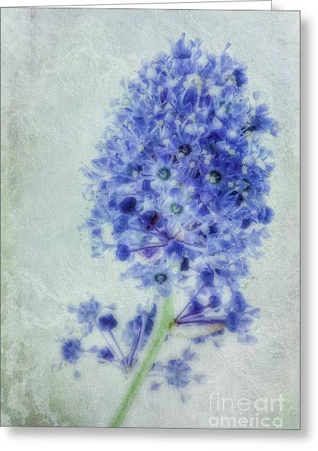 Californian Blue Greeting Card by John Edwards
