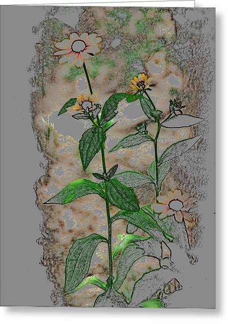 Call Me Daisy Greeting Card by Linda Segerson