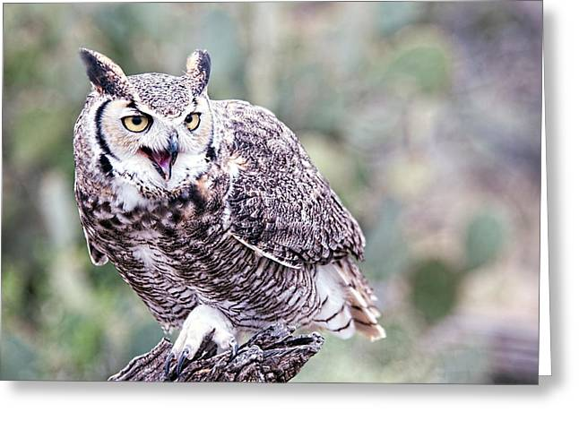 Greeting Card featuring the photograph Call Of The Owl by Dan McManus