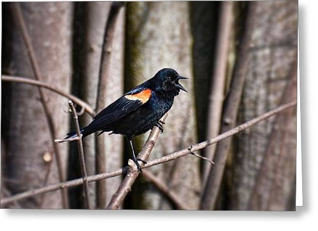 Call Of The Red Winged Blackbird Greeting Card by Henry Kowalski