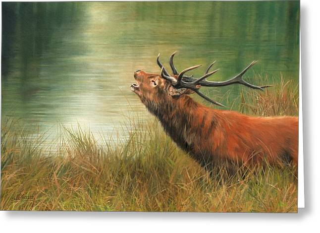 Call Of The Wild 2 Greeting Card by David Stribbling