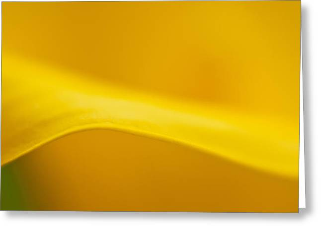 Calla Curve Greeting Card by Joan Herwig