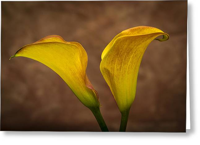 Greeting Card featuring the photograph Calla Lilies by Sebastian Musial