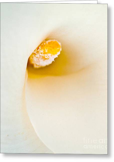 Calla Lilly Greeting Card by Bill Gallagher