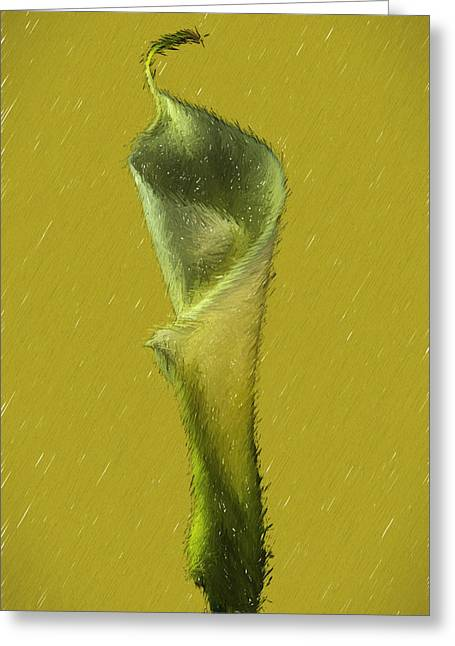Calla Lily Flower Design Greeting Card by David Haskett
