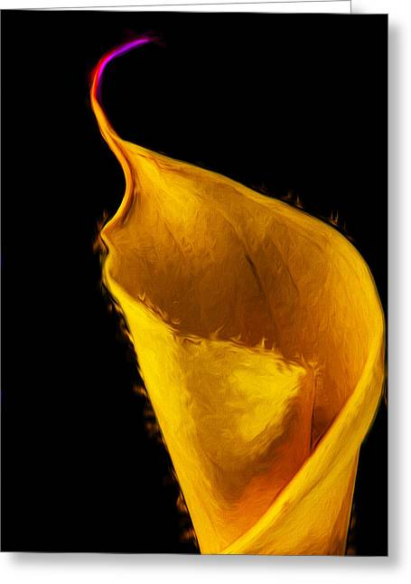 Calla Lily Flower Painted Digitally Greeting Card by David Haskett