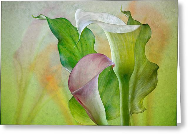Calla Lily Garden Greeting Card