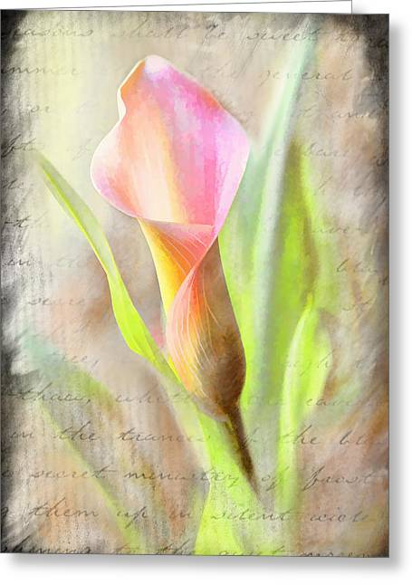 Calla Lily In Pink Greeting Card