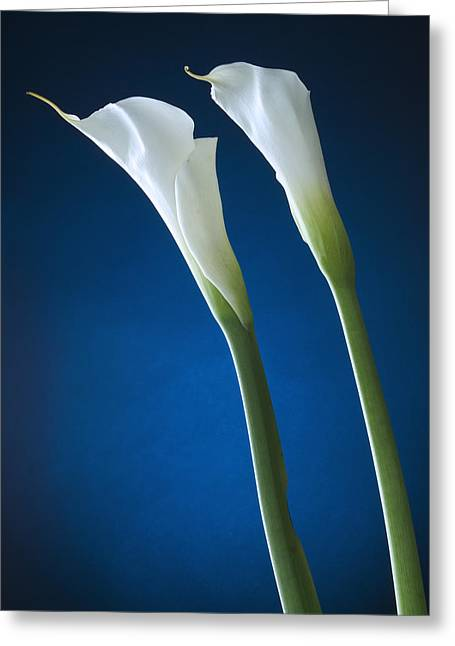 Calla Lily On Blue Greeting Card