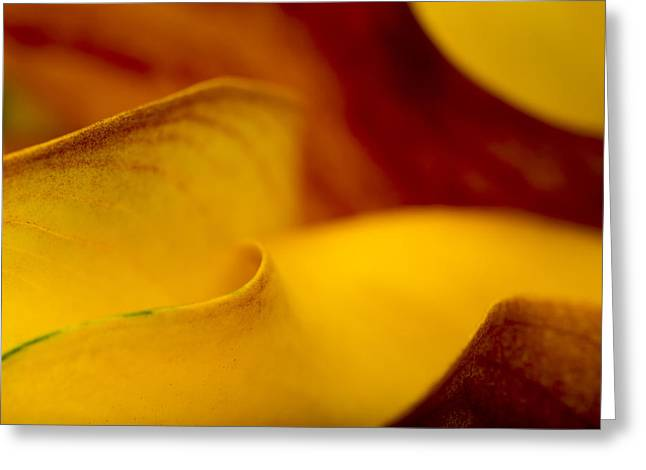 Calla Lily Waves Greeting Card