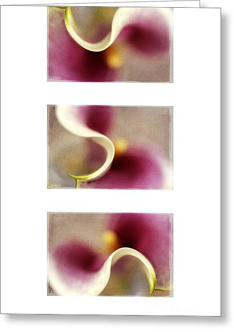 Calla Lily X 3 Greeting Card by Darren Fisher