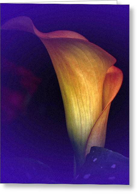 Calla Study No. 3 Greeting Card