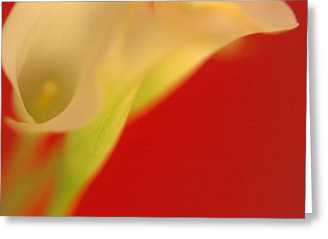 Callas On Red Greeting Card by Bruce Rolff