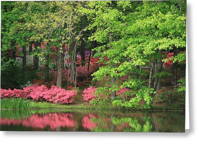 Callaway Gardens 1 Greeting Card by Mountains to the Sea Photo