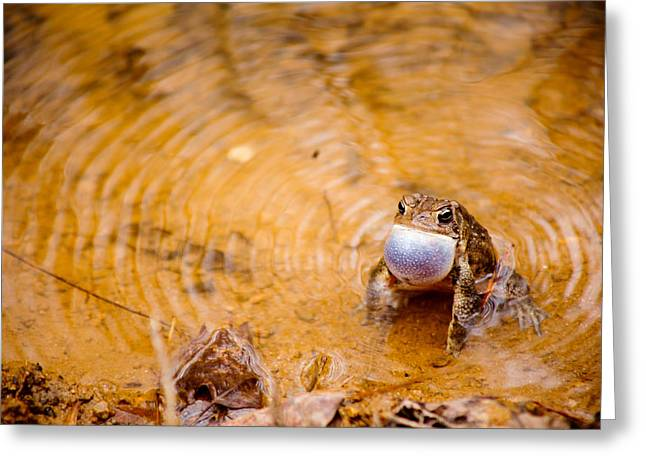 Greeting Card featuring the photograph Calling All Frogs by Courtney Webster