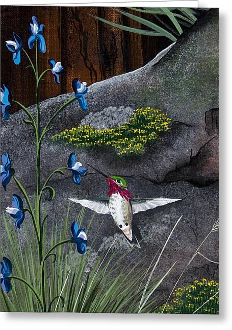 Calliope Hummingbird Greeting Card by Jennifer Lake