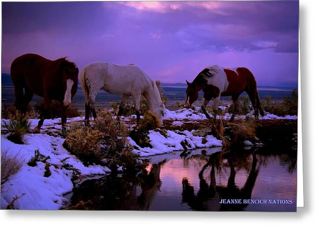 Calm After The Storm  Greeting Card by Jeanne  Bencich-Nations