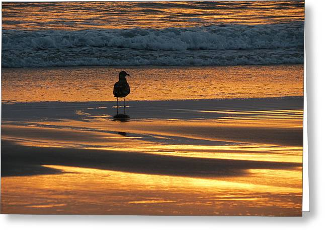Greeting Card featuring the photograph Calm by Ramona Johnston
