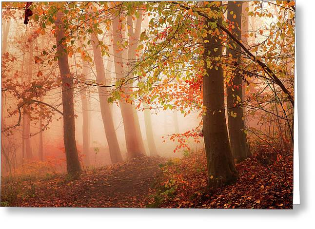 Calm Walk In Colors. Greeting Card