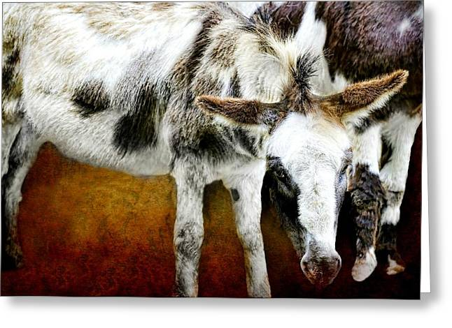 Calves Out To Pasture Greeting Card by Diana Angstadt