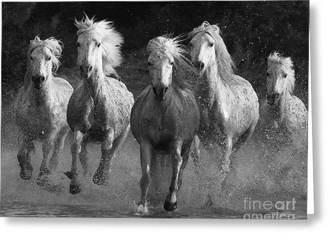 Camargue Horses Running Greeting Card