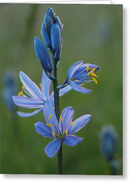 Camas Greeting Card by Jenessa Rahn