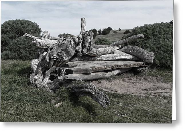 Cambria Driftwood Bench 3 Greeting Card