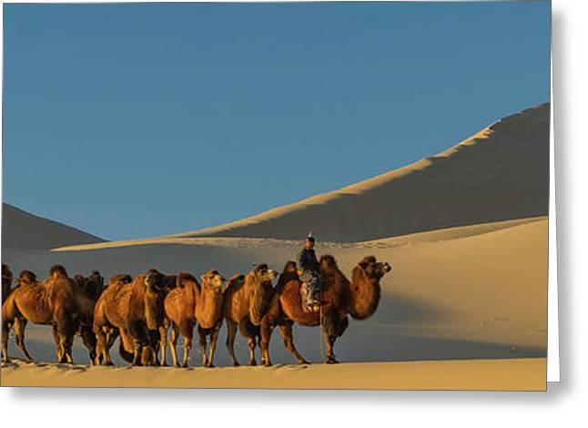 Camel Caravan In A Desert, Gobi Desert Greeting Card by Panoramic Images