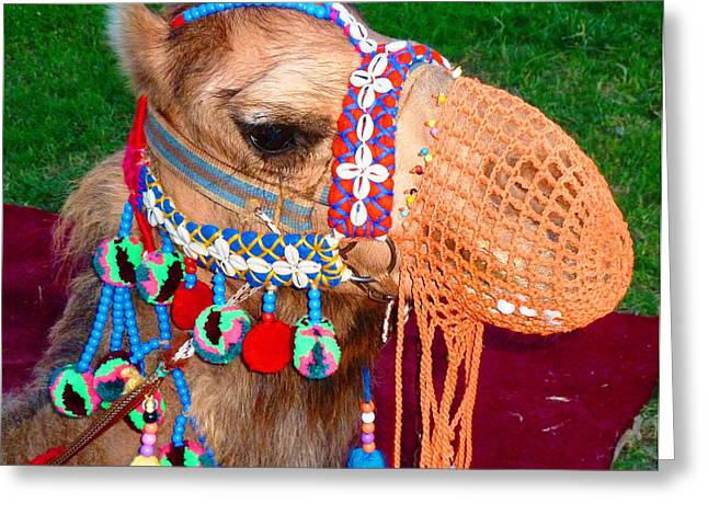 Camel Fashion Greeting Card by Julia Ivanovna Willhite