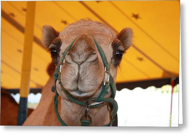 Camel Headshot Greeting Card by John Telfer