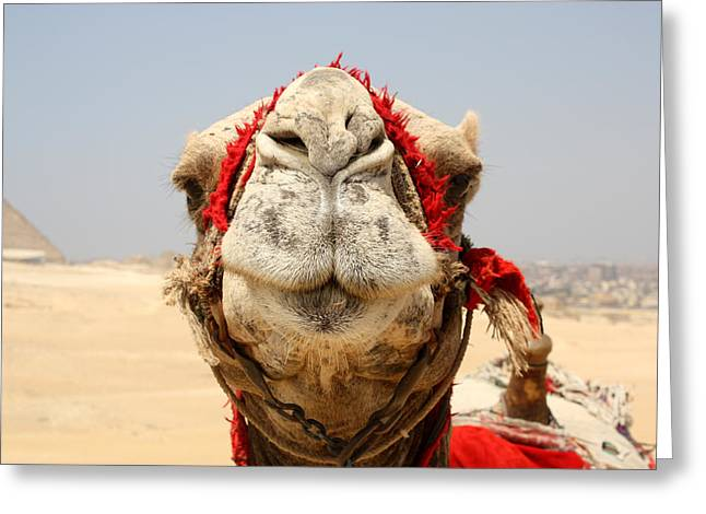 Camel Kiss Greeting Card by Laura Hiesinger