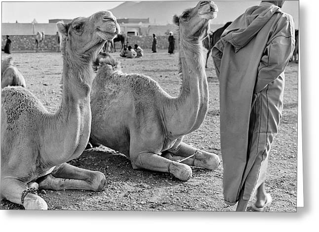 Camel Market, Morocco, 1972 - Travel Photography By David Perry Lawrence Greeting Card