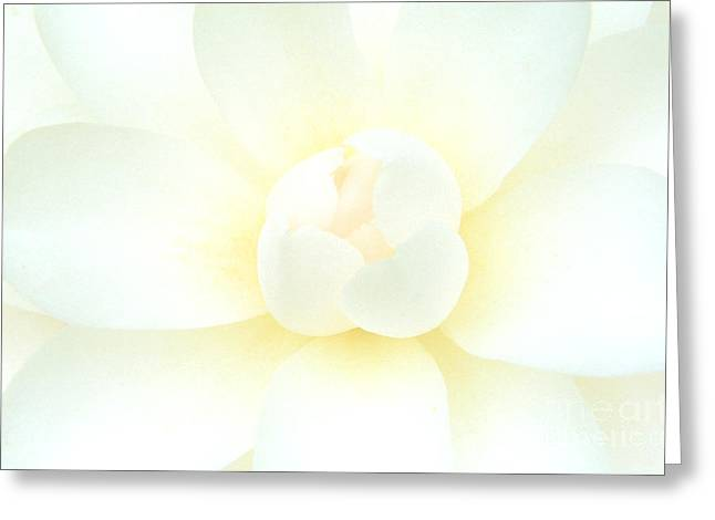 Greeting Card featuring the photograph Camelia Flower by Chris Scroggins