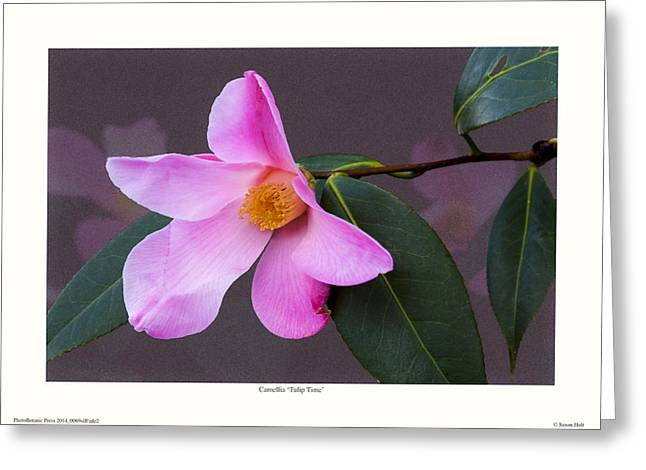 Camellia 'tulip Time' Greeting Card by Saxon Holt