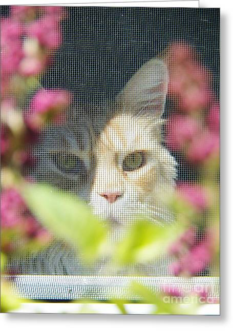 Cameo Peeking Through The Screen Greeting Card by Judy Via-Wolff