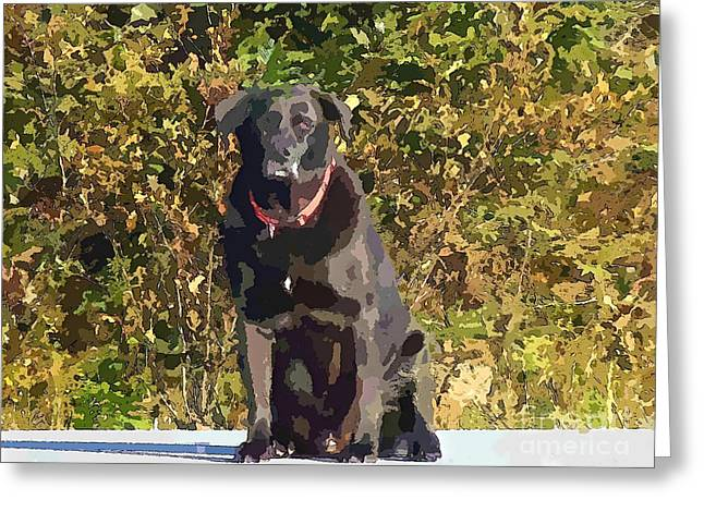 Camouflage Labrador - Black Dog - Retriever Greeting Card by Barbara Griffin