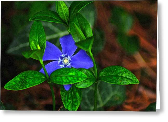 Camouflage Greeting Card by Frozen in Time Fine Art Photography