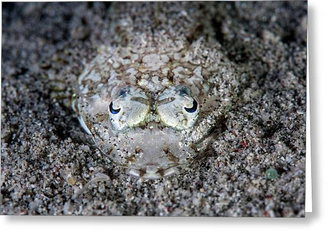Camouflaged Flathead Fish Greeting Card by Ethan Daniels