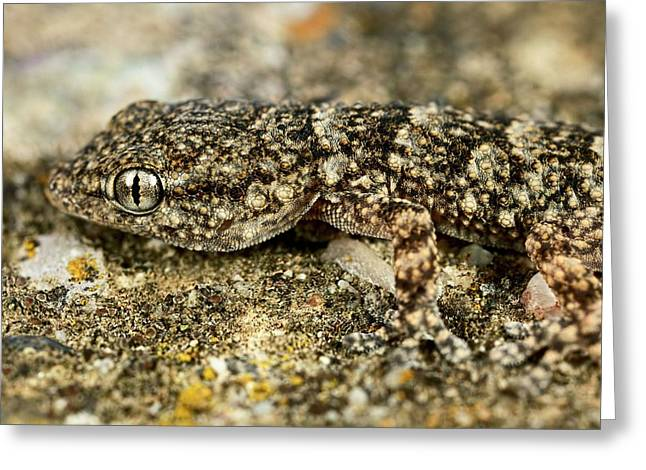 Camouflaged Gecko Greeting Card