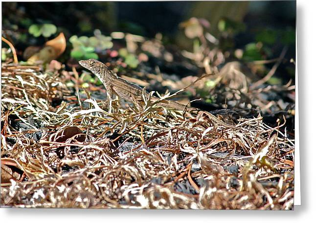Camouflaged Lizard Greeting Card by Cyril Maza