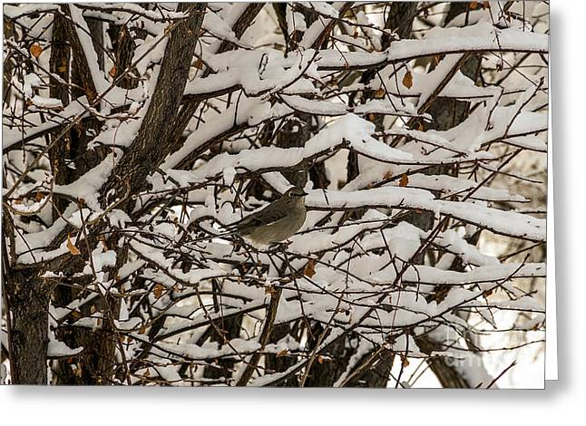 Greeting Card featuring the photograph Camouflaged Thrush by Sue Smith